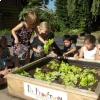 De Proeftuin van de basisschool De Regenboog